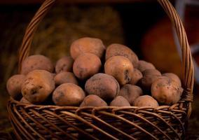 Kartoffel in einem Weidenholzkorb auf Heu foto