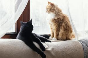 süße Katzen, die drinnen zu Hause liegen foto