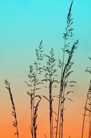 Blumenpflanze Silhouette und Sonnenuntergang in der Frühlingssaison foto