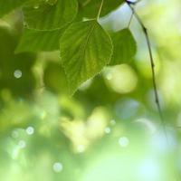 grüner Baum verlässt im grünen Hintergrund der Frühlingssaison foto