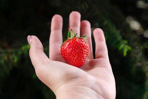 Nahaufnahme einer Frauenhände, die frische Erdbeere auf grünem Hintergrund halten foto