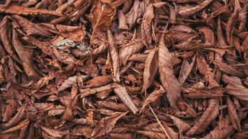 Herbstlaub Hintergrund foto