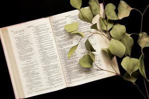 Draufsicht einer offenen Bibel mit einem Zweig der Blätter auf einem dunklen Hintergrund foto