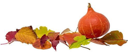Herbstdekoration mit buntem Laub und Hokkaido-Kürbis lokalisiert auf Weiß foto
