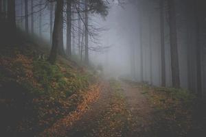dunkler Pfad in einem nebligen Herbstwald foto