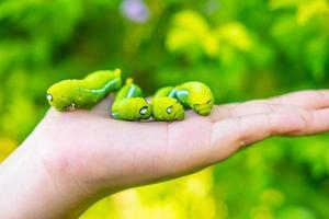 viele grüne Würmer in den Händen foto