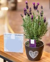 Lavendel im Topf mit Postkarte foto