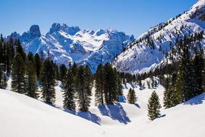 schneebedeckte Gipfel und Kiefern foto