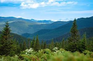 Karpatengebirgspanorama der grünen Hügel im Sommerberg foto