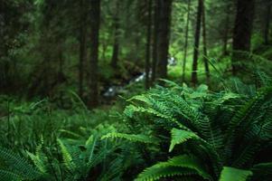 Karpaten-Naturwald auf grünen Hügeln in den Sommerbergen foto