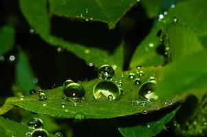 Wassertropfen auf dem grünen Blatt nach Regentropfen von Wasser mit Reflexion auf unscharfem Hintergrund foto