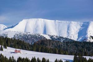Kiefern und Schnee foto
