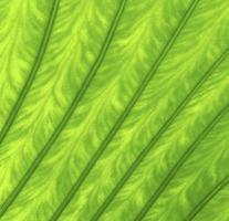 Textur eines grünen Blattes foto