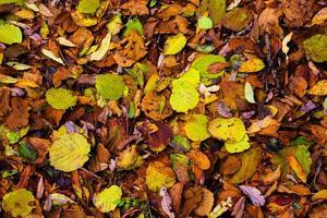Farben des Herbstes foto