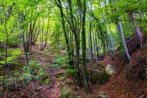 der Wald von Arsiero in der Nähe von Vicenza, Italien foto