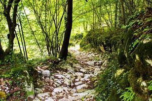 Alpenweg mit Felsen foto