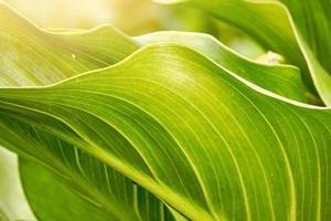 grüne Pflanze verlässt im Frühling foto
