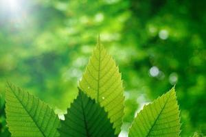 grüner Baum verlässt im grünen Hintergrund der Natur foto