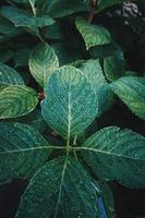 grüne Pflanzenblätter in der Natur foto