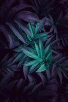 blaue Pflanzenblätter in der Natur foto
