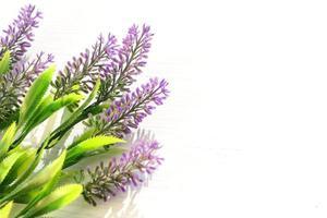 lila Blumen auf weißem Hintergrund foto
