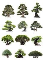 Gruppe von Bonsai-Bäumen lokalisiert auf weißem Hintergrund foto