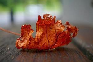 braunes Baumblatt in der Herbstsaison foto