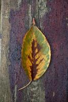 gelbes Baumblatt in der Herbstsaison foto