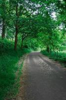 Straße mit grünen Bäumen im Berg foto