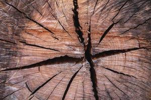 die Hintergrundstruktur des geschnittenen Baumes foto