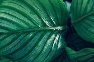 dunkler tropischer grüner Laubhintergrund foto