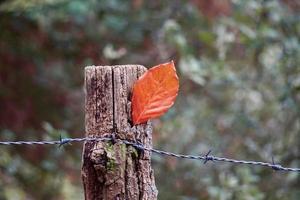 braunes Blatt in der Herbstsaison foto