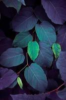 blaue und grüne Pflanze hinterlässt blauen Hintergrund foto