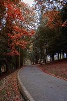 Straße mit braunen Bäumen in der Herbstsaison foto