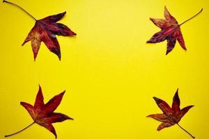 rote Ahornblätter auf dem gelben Hintergrund in der Herbstsaison foto
