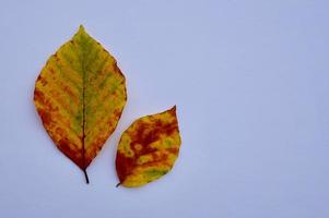 braune Blätter in der Herbstsaison foto