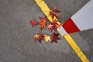 rote Ahornblätter in der Herbstsaison foto