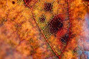 gelbes Blatt im gelben Hintergrund der Herbstsaison foto