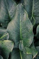 Tropfen auf die grünen Pflanzenblätter an regnerischen Tagen foto