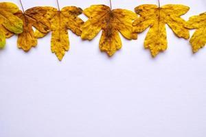 gelbe Blätter auf dem weißen Hintergrund foto