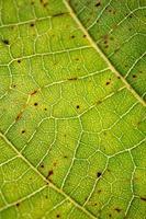 grüner Blattadern grüner Hintergrund foto