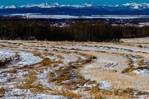 Reste von der Ernte Springbank Alberta Kanada foto