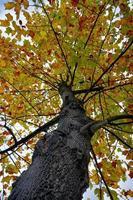 Bäume mit gelben Blättern in der Herbstsaison foto