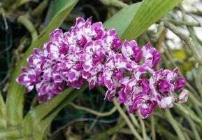 schöne Orchideenblume foto