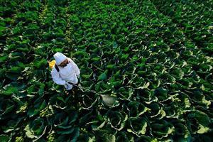 Gärtnerin in einem Schutzanzug und Maskenspray Insektizid und Chemie auf riesigen Kohl Gemüsepflanze foto