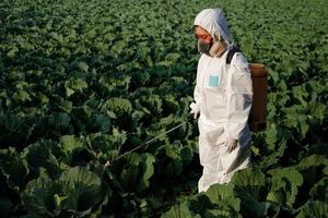 Gärtner in einem Schutzanzug sprühen Insektizid und Chemie auf Kohlgemüsepflanze foto