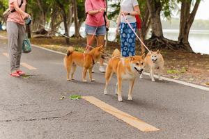 Gruppe von Frauen, die mit ihrer Hunderasse inu im Park spazieren gehen foto