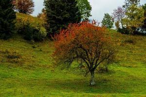 roter Baum auf grüner Wiese foto