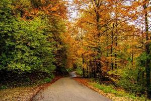 Asphalt und Herbst foto