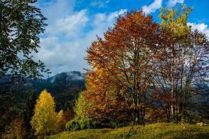 alle Schattierungen des Herbstes eins foto